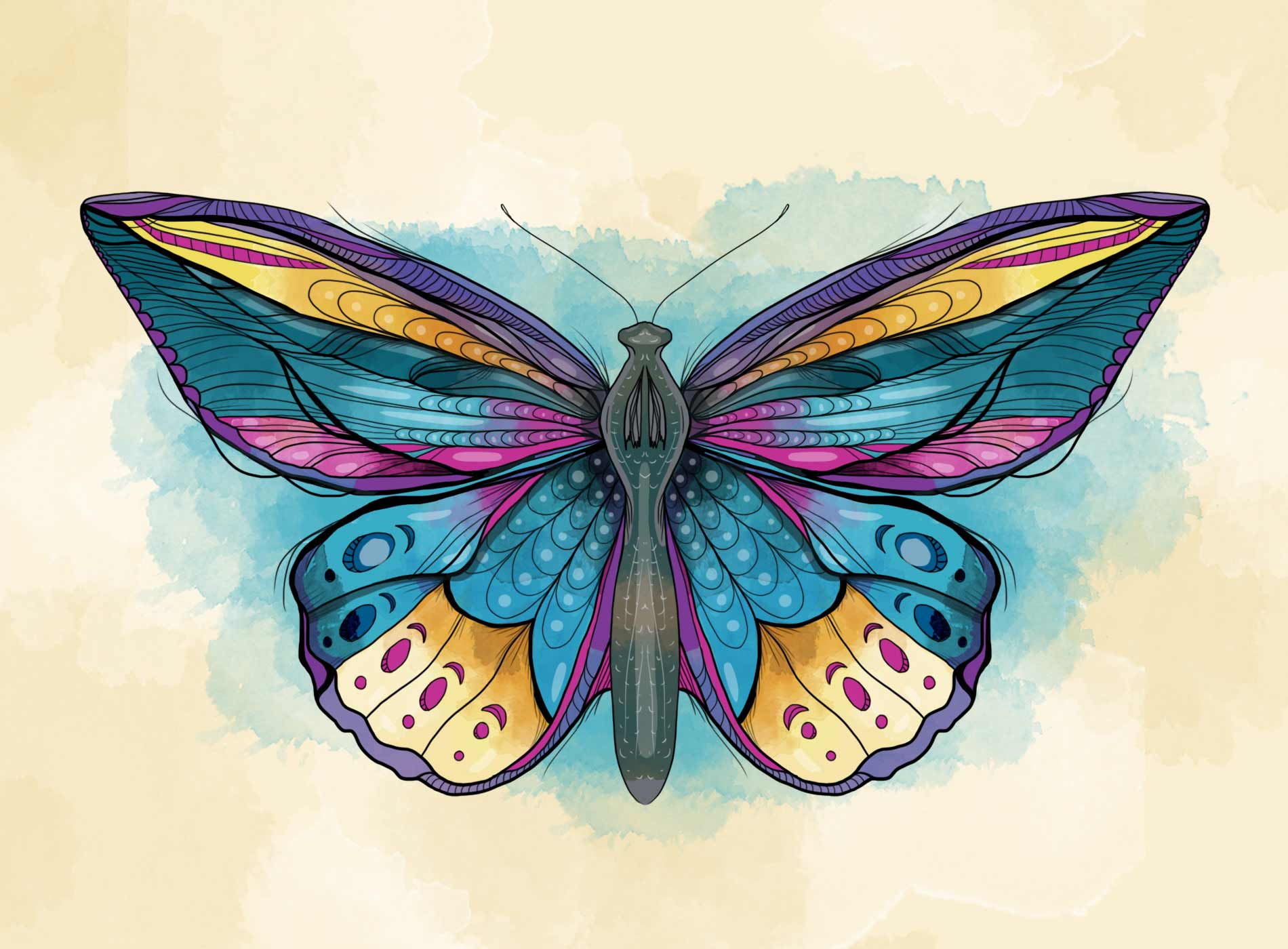 Butterfly-Illustration