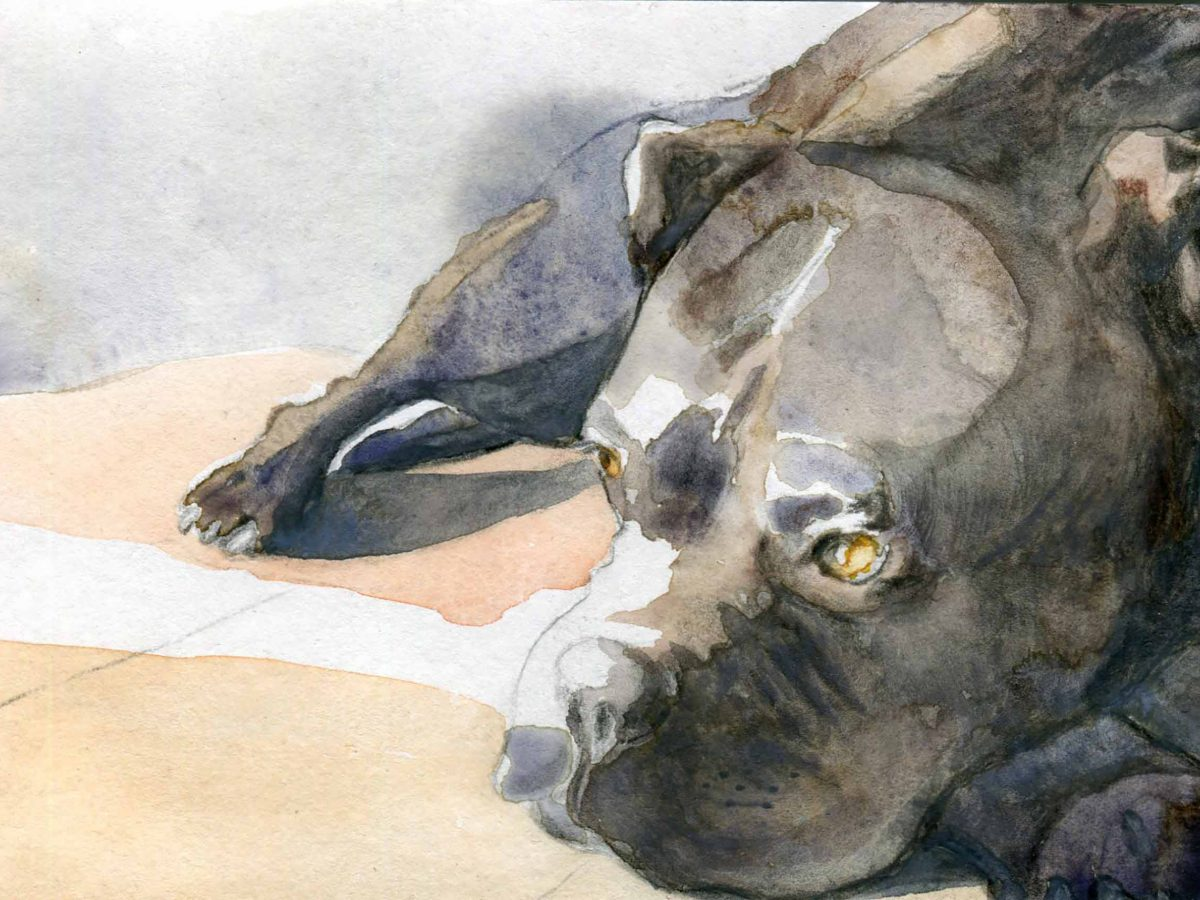 """""""The business end of drawing is one that artists struggle with"""" – illustrator Ann Kiernan"""